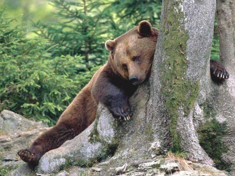 желейный медведь валерка рецепт его приготовления